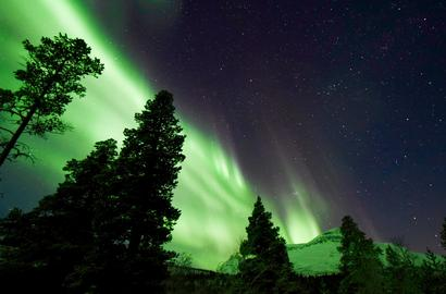 Intensive green Northern Lights over a forest landscape.